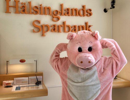 """""""Spargrisen"""" klar för VM för maskotar!!!"""